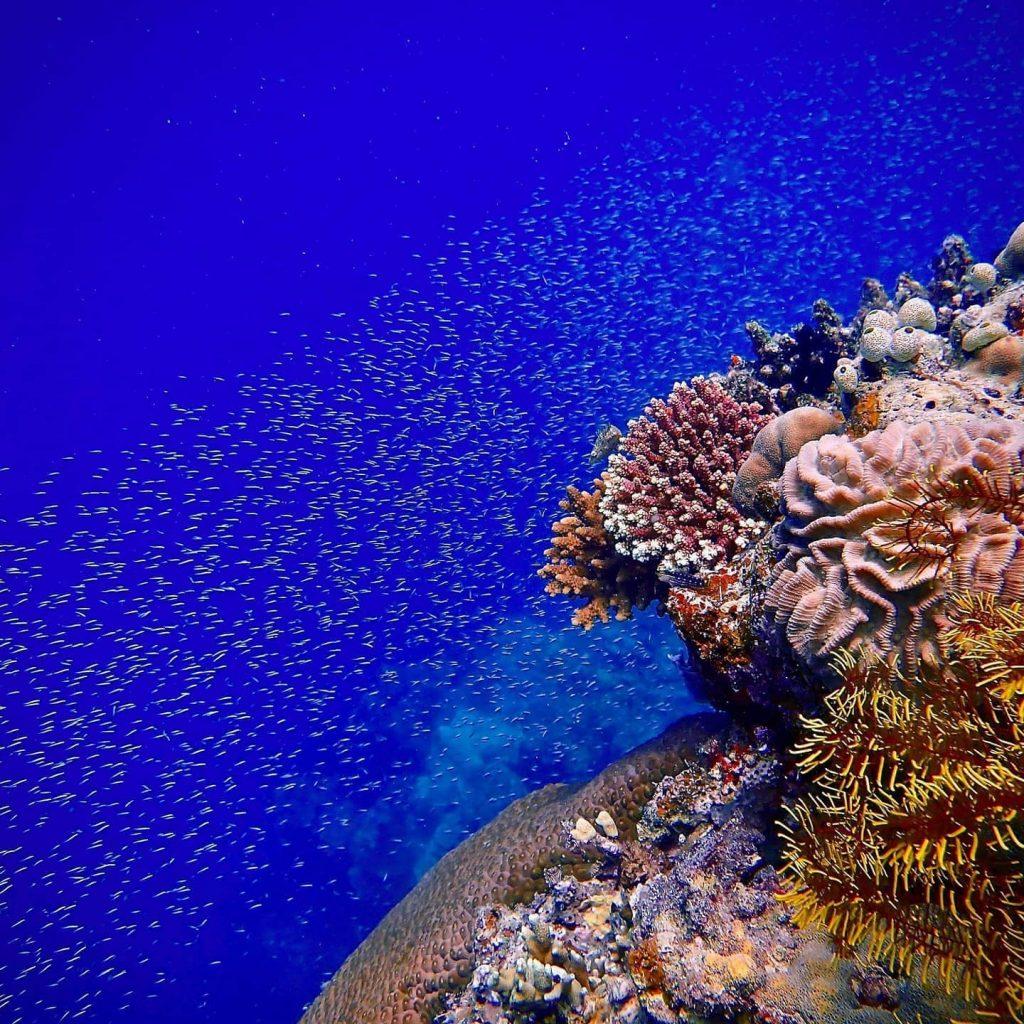 underwater statues diving Phiilippines